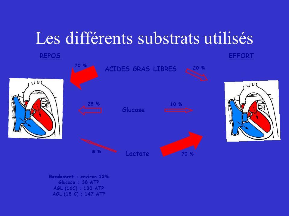 Les différents substrats utilisés