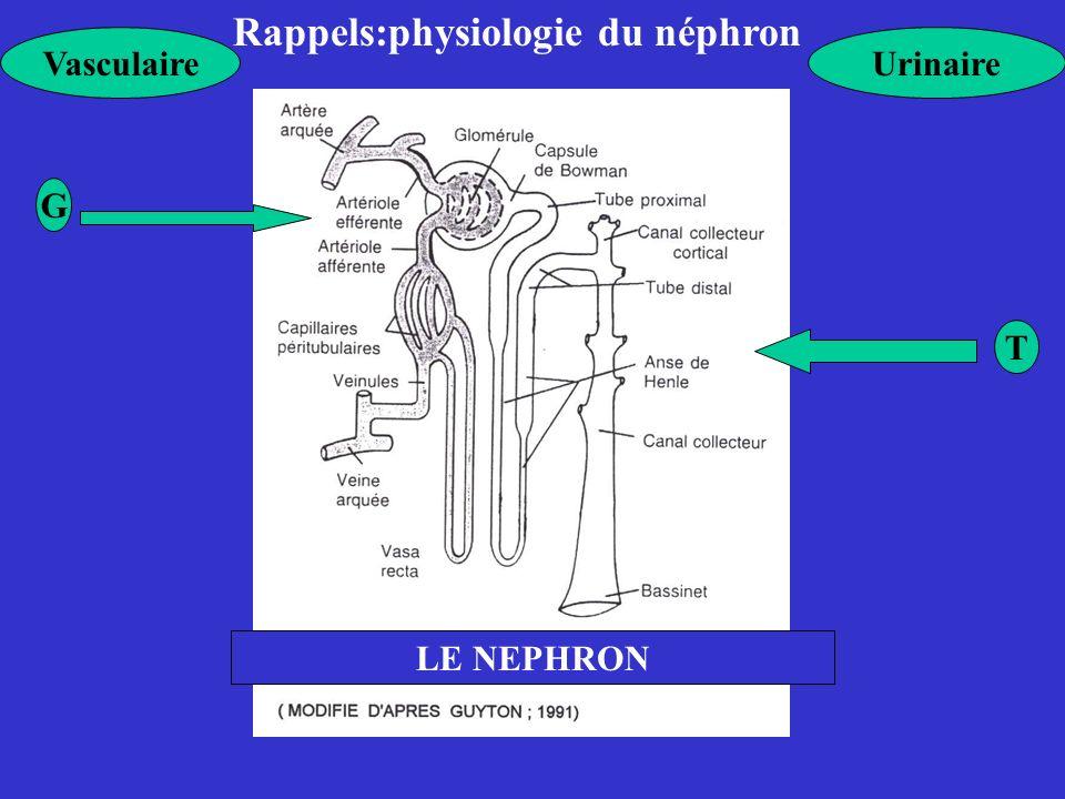 Rappels:physiologie du néphron