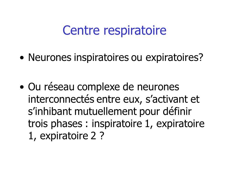 Centre respiratoire Neurones inspiratoires ou expiratoires