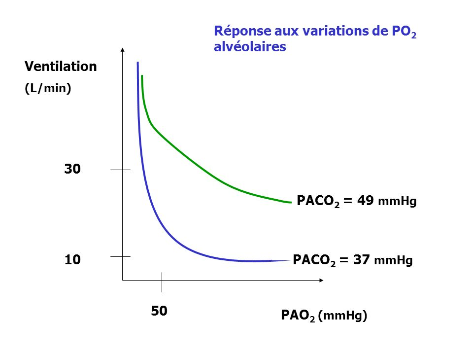 Réponse aux variations de PO2 alvéolaires