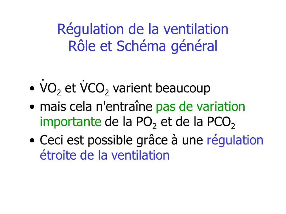 Régulation de la ventilation Rôle et Schéma général