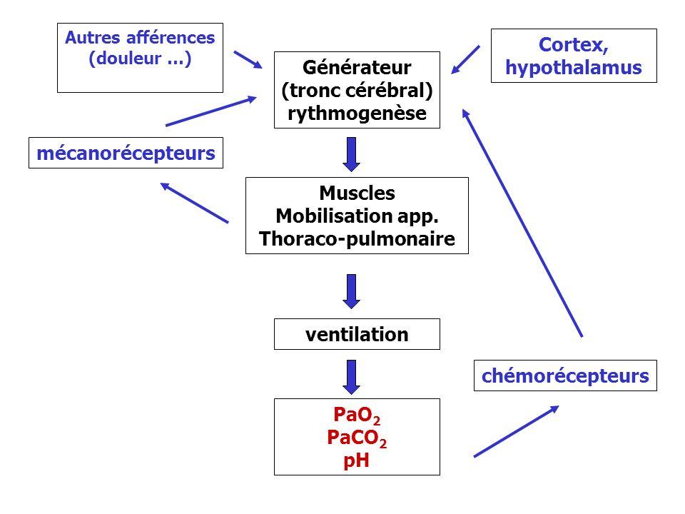 Autres afférences (douleur …) Mobilisation app. Thoraco-pulmonaire