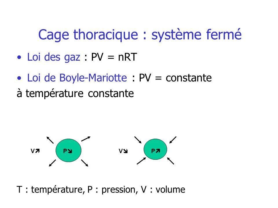 Cage thoracique : système fermé