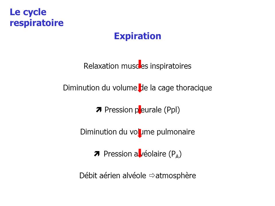 Le cycle respiratoire Expiration Relaxation muscles inspiratoires