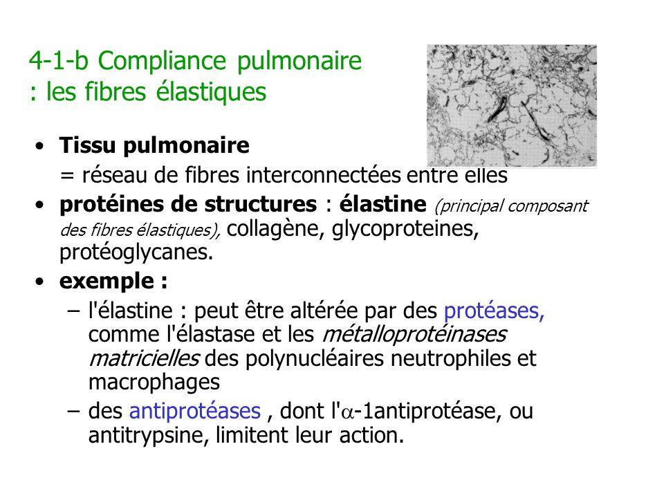4-1-b Compliance pulmonaire : les fibres élastiques