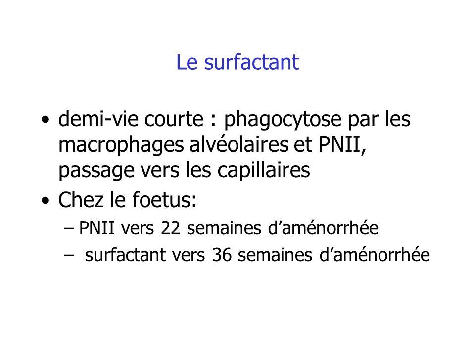 Le surfactant demi-vie courte : phagocytose par les macrophages alvéolaires et PNII, passage vers les capillaires.