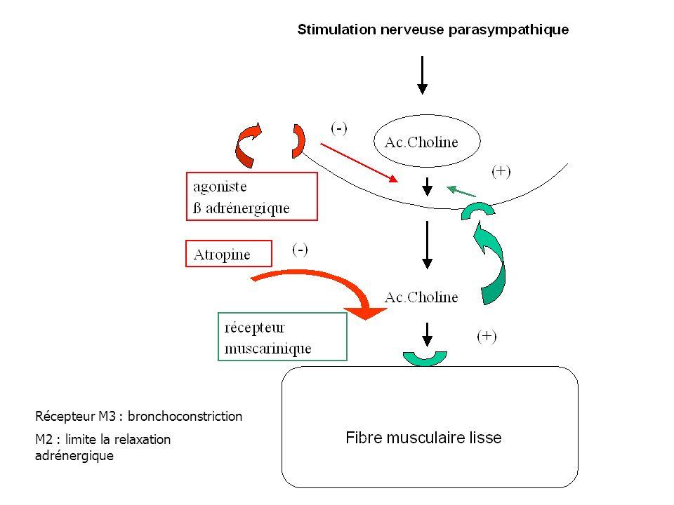 Récepteur M3 : bronchoconstriction