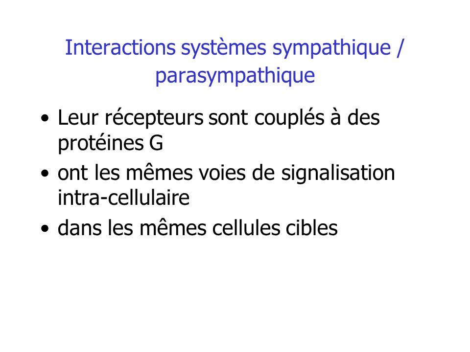 Interactions systèmes sympathique / parasympathique