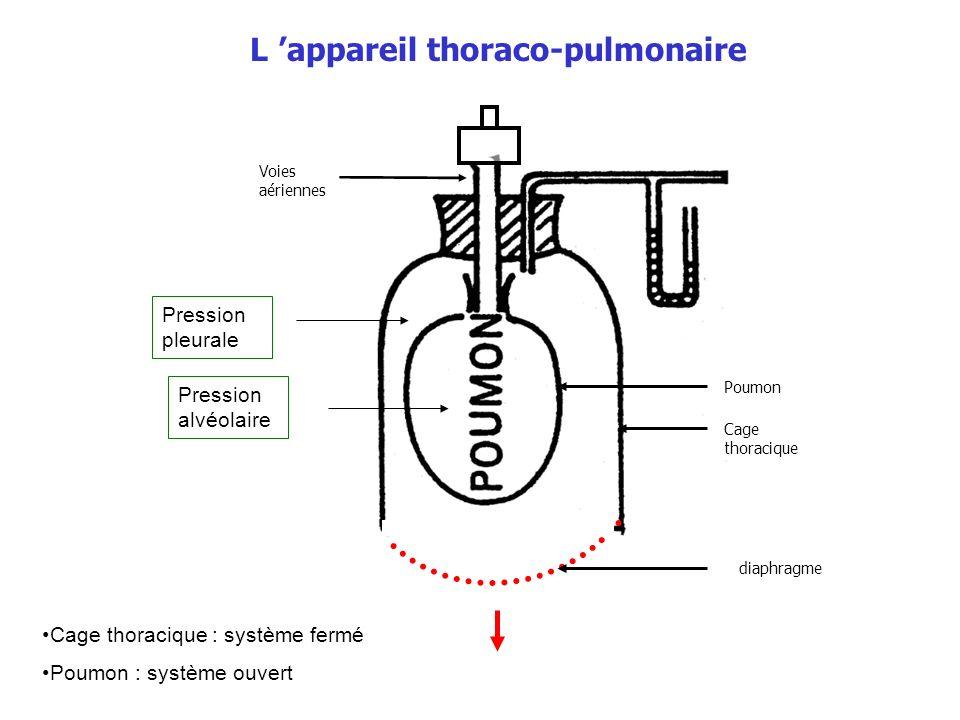 L 'appareil thoraco-pulmonaire