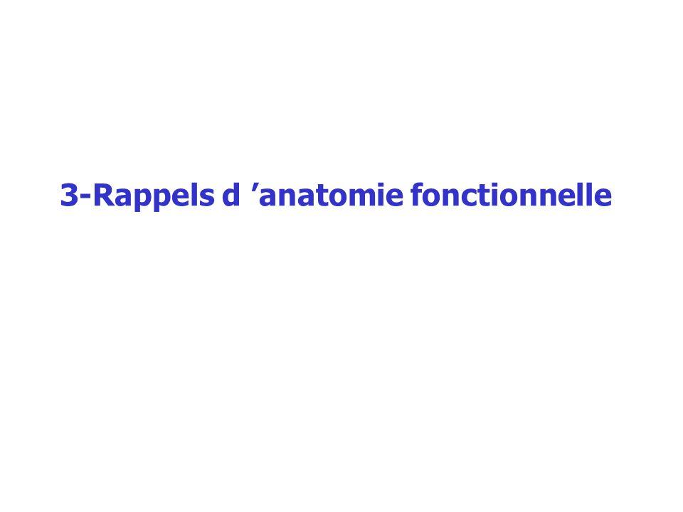 3-Rappels d 'anatomie fonctionnelle