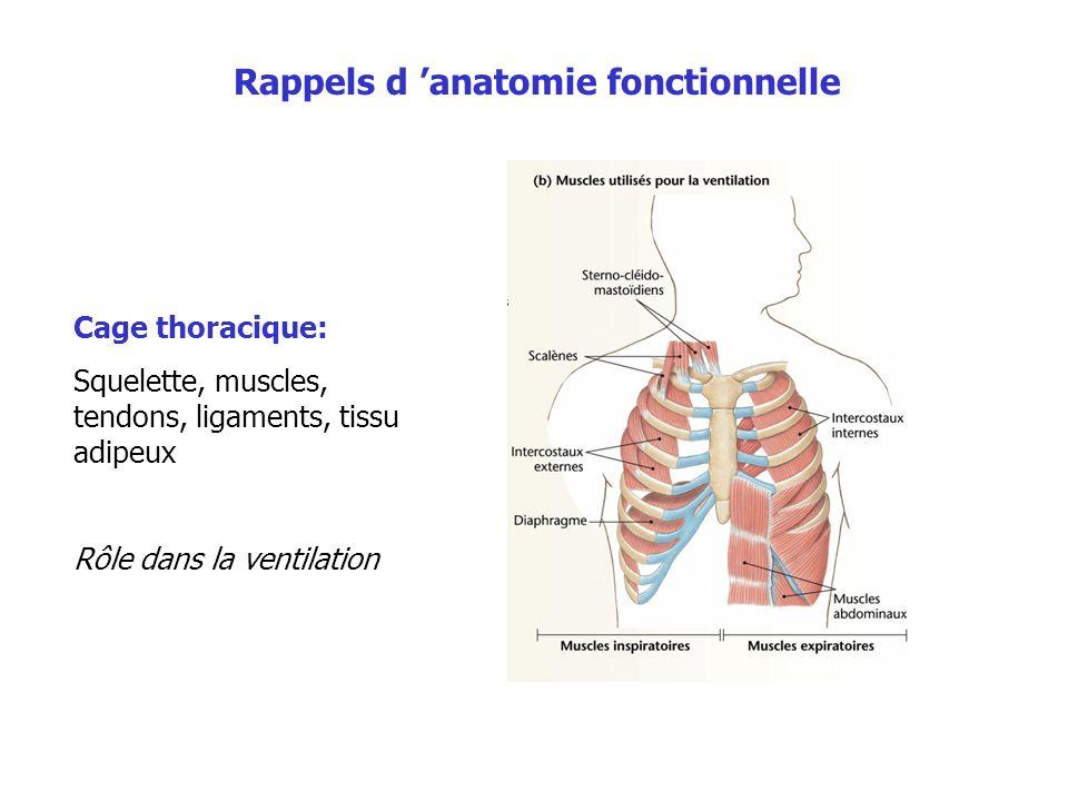 Rappels d 'anatomie fonctionnelle