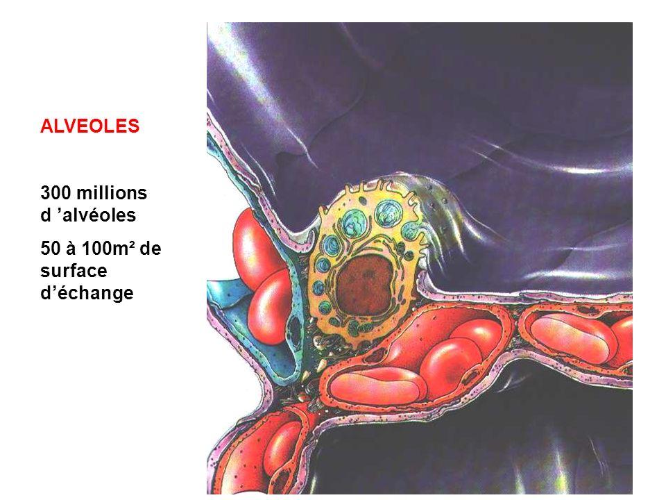 ALVEOLES 300 millions d 'alvéoles 50 à 100m² de surface d'échange