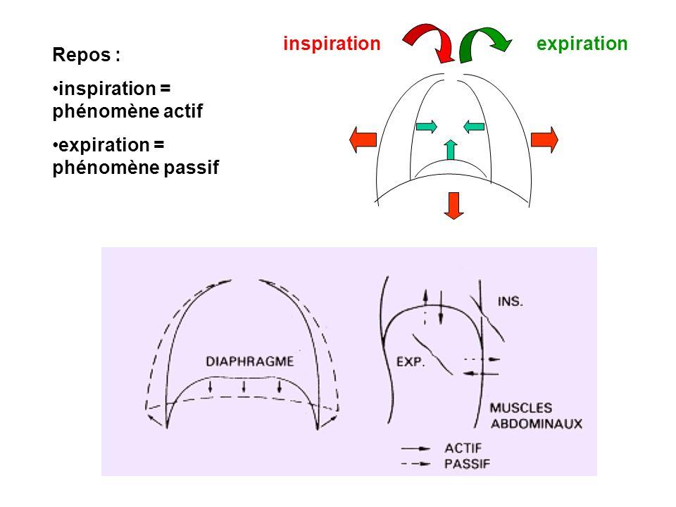 inspiration expiration Repos : inspiration = phénomène actif expiration = phénomène passif