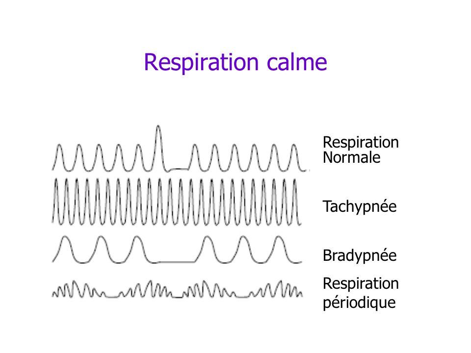 Respiration calme Respiration Normale Tachypnée Bradypnée