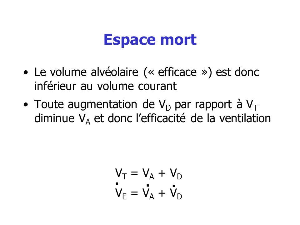 Espace mort Le volume alvéolaire (« efficace ») est donc inférieur au volume courant.