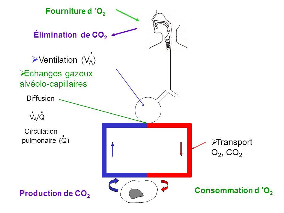 Circulation pulmonaire (Q)