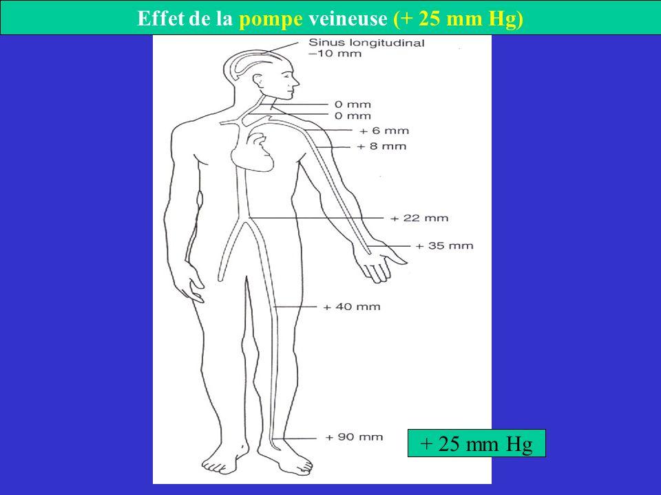 Effet de la pompe veineuse (+ 25 mm Hg)