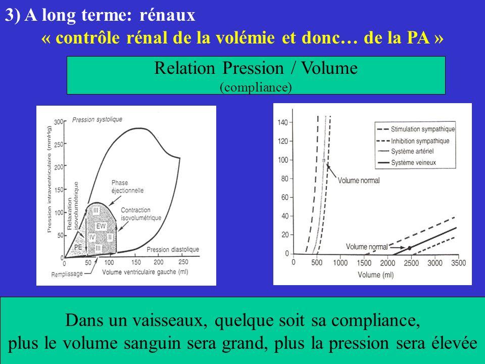 « contrôle rénal de la volémie et donc… de la PA »