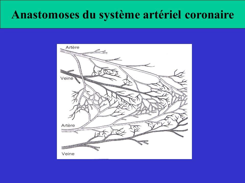 Anastomoses du système artériel coronaire