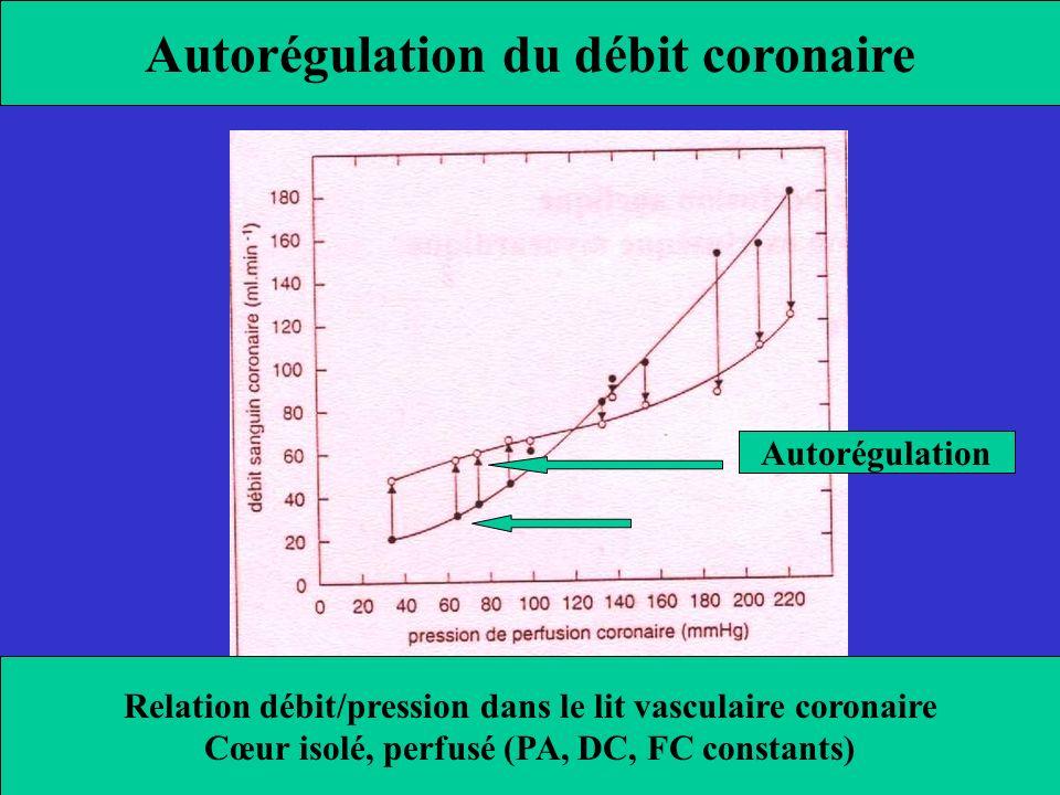 Autorégulation du débit coronaire