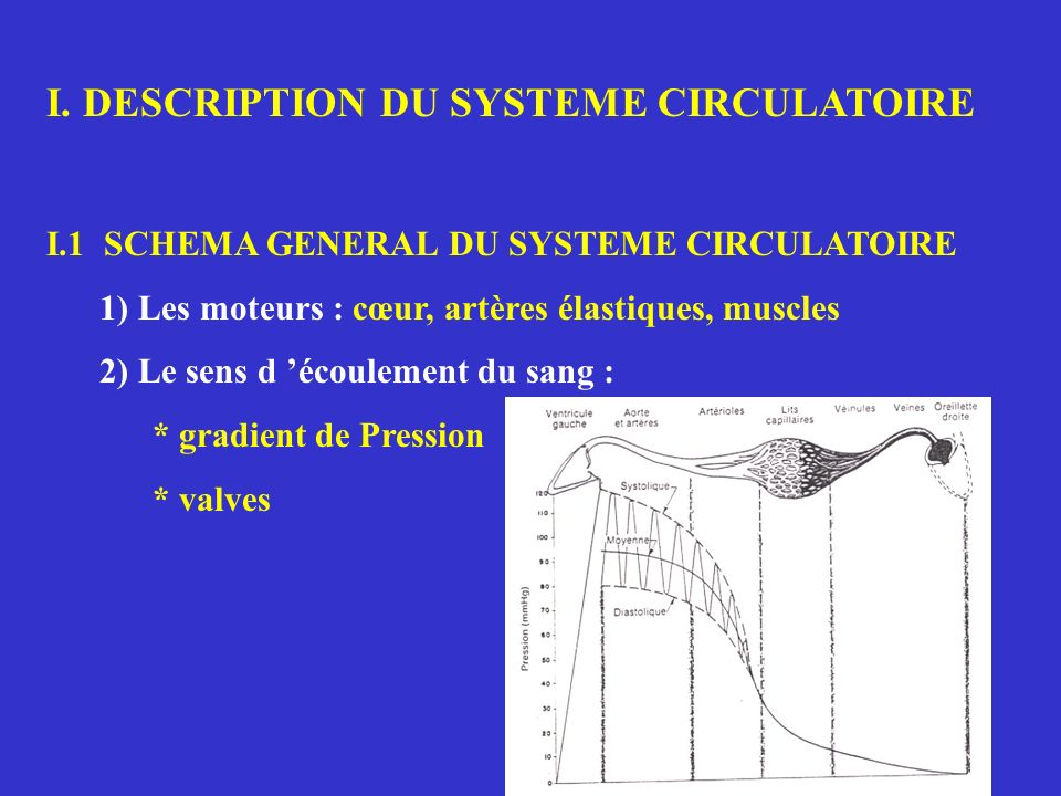 I. DESCRIPTION DU SYSTEME CIRCULATOIRE