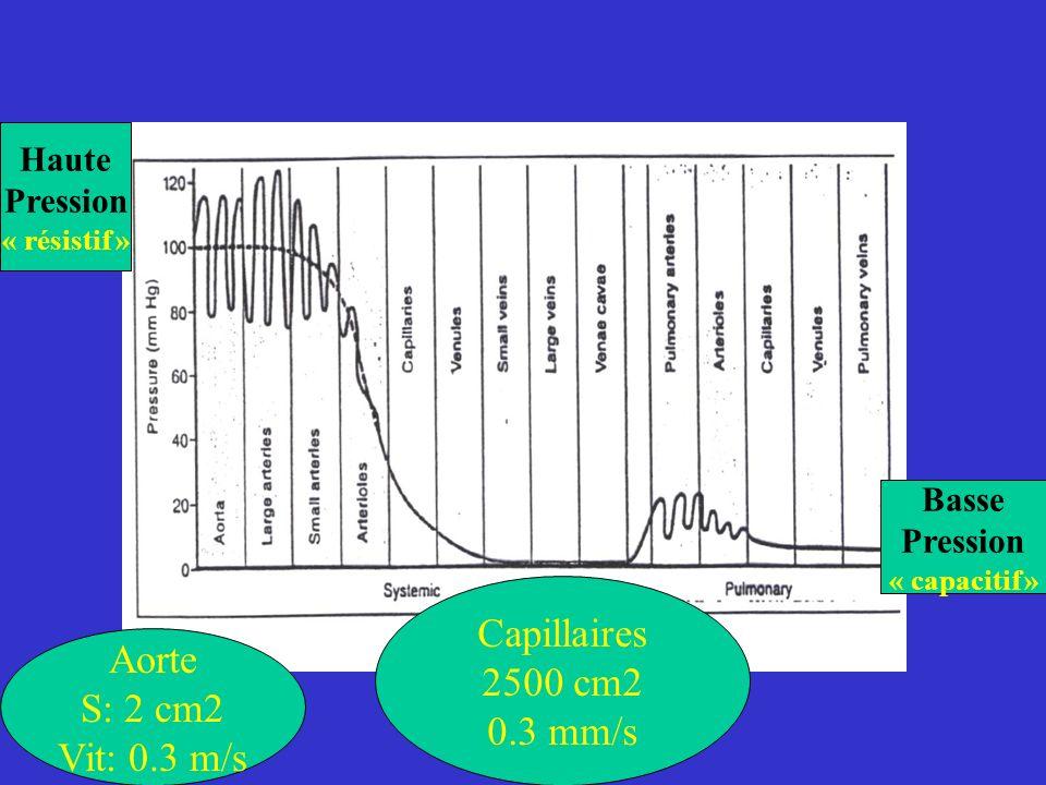 Capillaires 2500 cm2 Aorte 0.3 mm/s S: 2 cm2 Vit: 0.3 m/s Haute