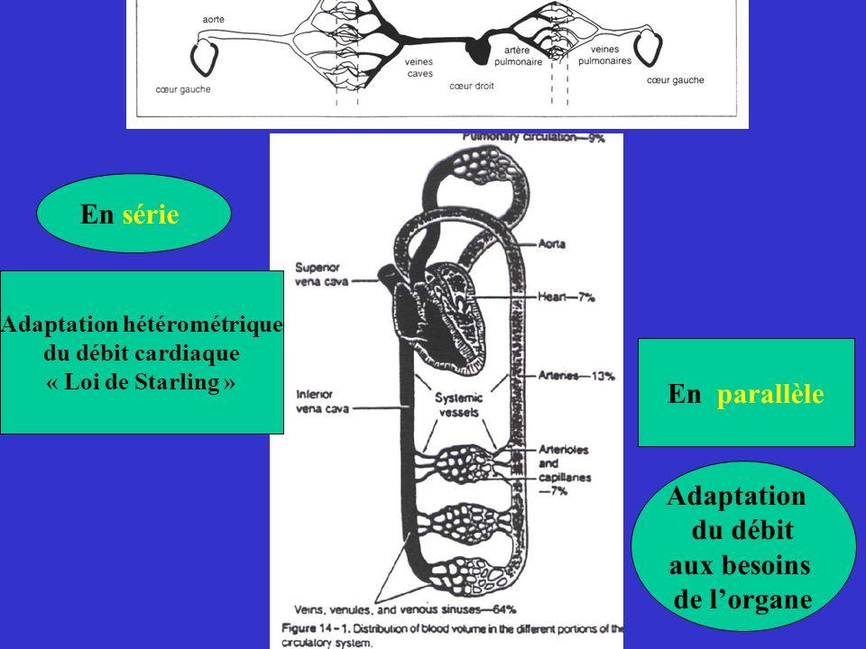 Adaptation hétérométrique