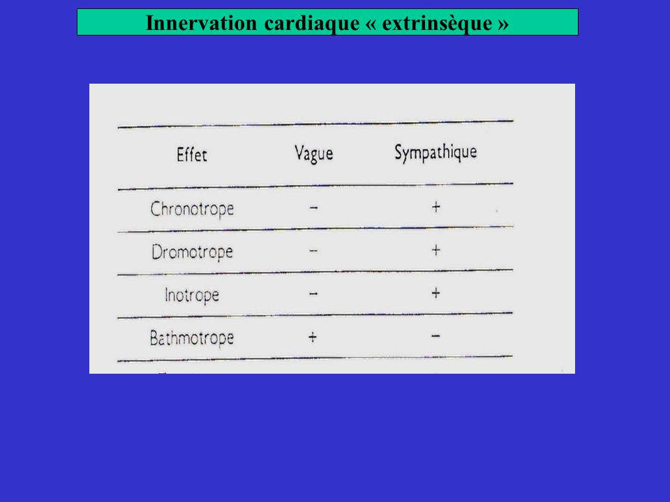 Innervation cardiaque « extrinsèque »