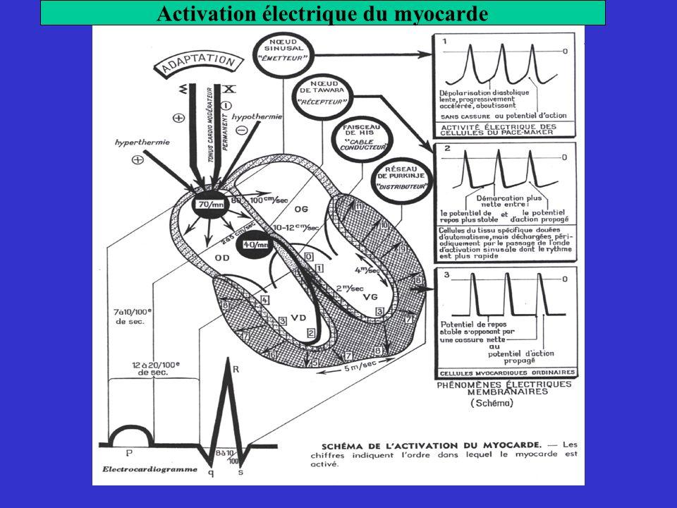 Activation électrique du myocarde