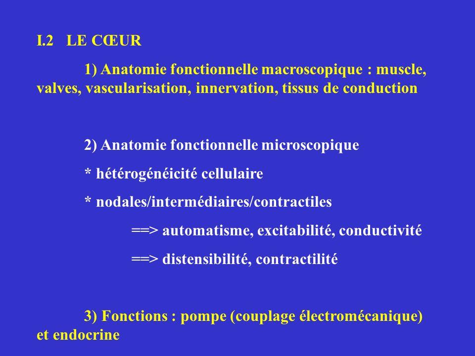 I.2 LE CŒUR 1) Anatomie fonctionnelle macroscopique : muscle, valves, vascularisation, innervation, tissus de conduction.