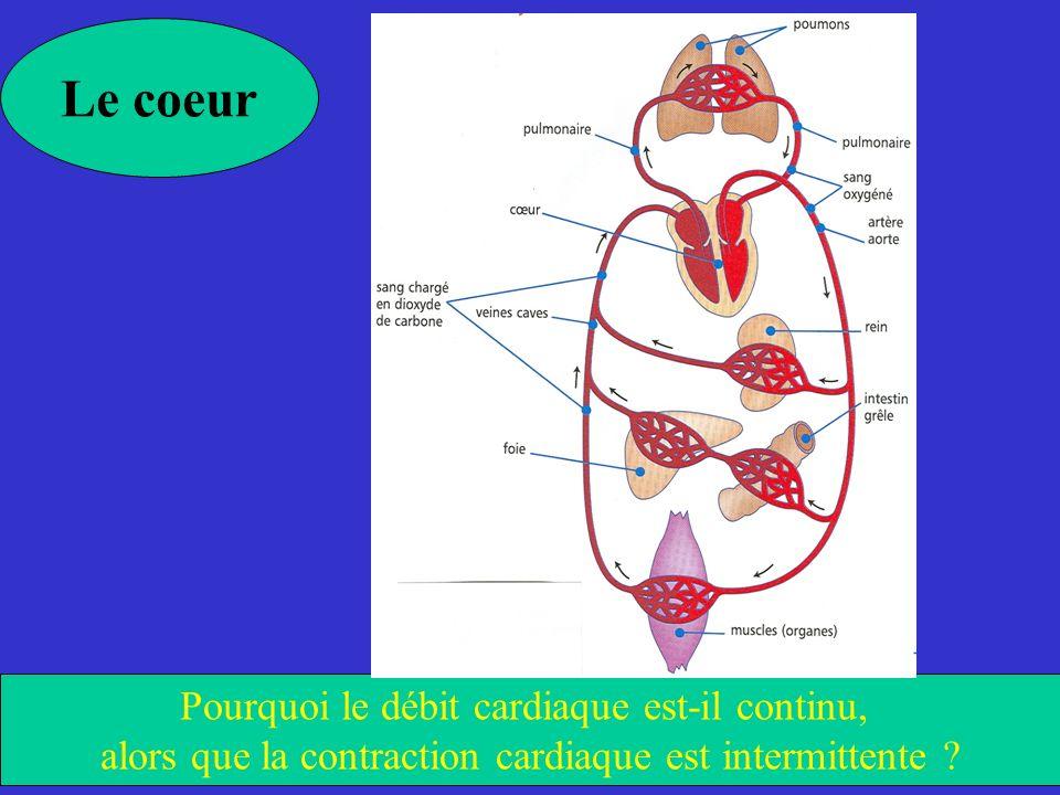 Le coeur Pourquoi le débit cardiaque est-il continu,