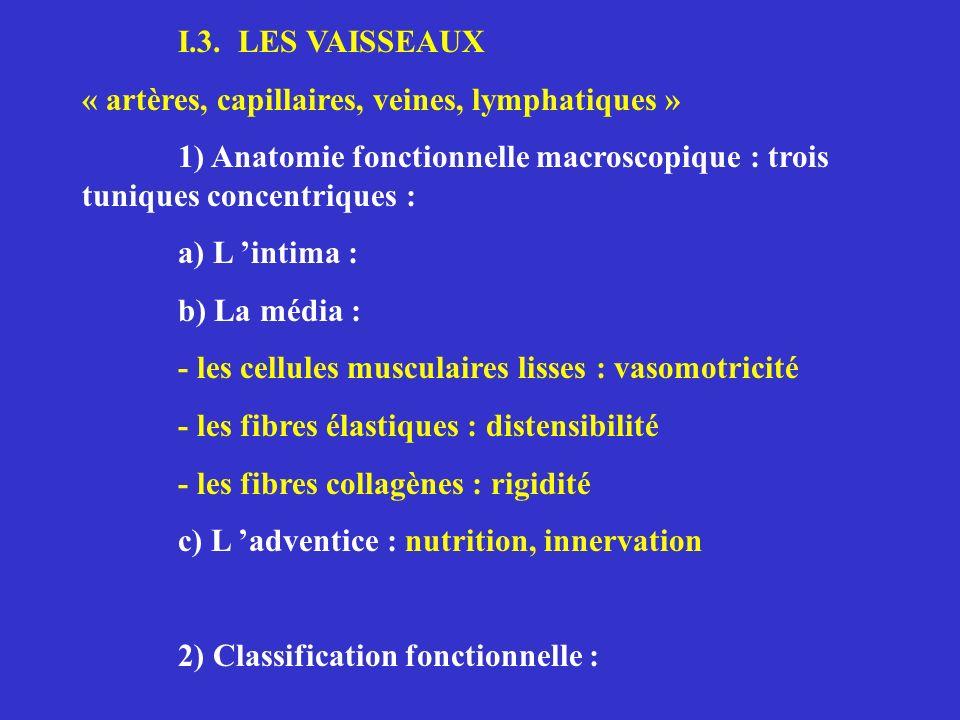 I.3. LES VAISSEAUX « artères, capillaires, veines, lymphatiques » 1) Anatomie fonctionnelle macroscopique : trois tuniques concentriques :
