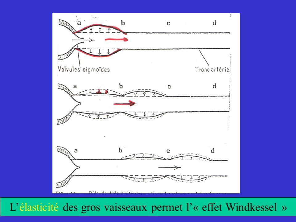 L'élasticité des gros vaisseaux permet l'« effet Windkessel »