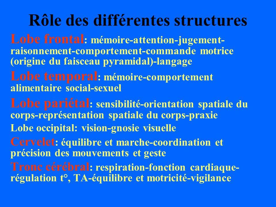 Rôle des différentes structures