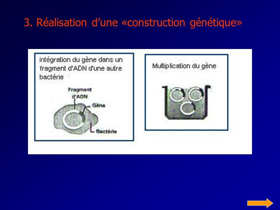 3. Réalisation d'une «construction génétique»