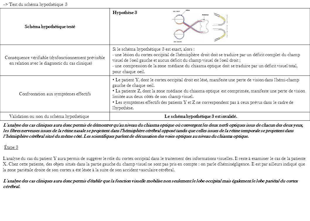 --> Test du schéma hypothétique 3 Schéma hypothétique testé