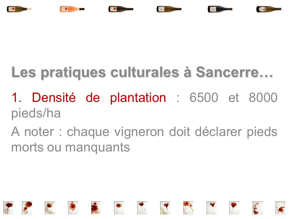 Les pratiques culturales à Sancerre…