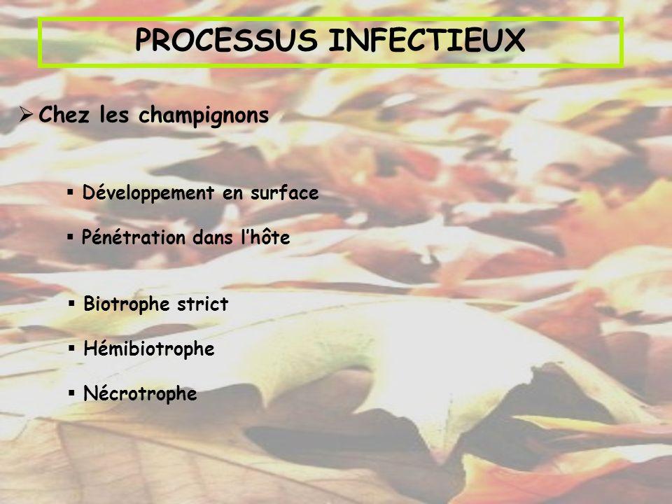 PROCESSUS INFECTIEUX Chez les champignons Développement en surface
