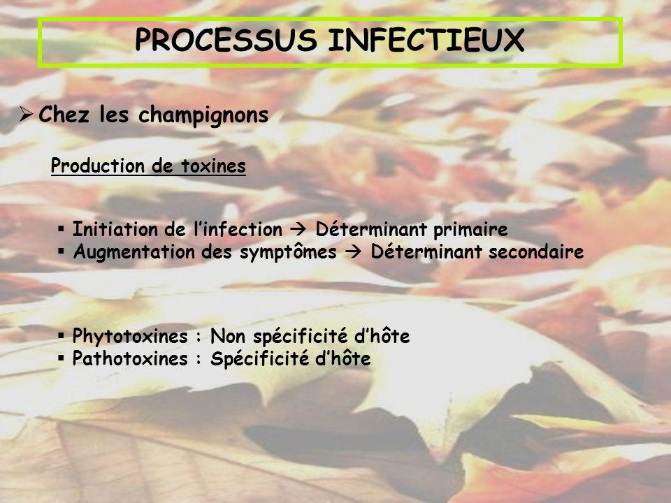 PROCESSUS INFECTIEUX Chez les champignons Production de toxines