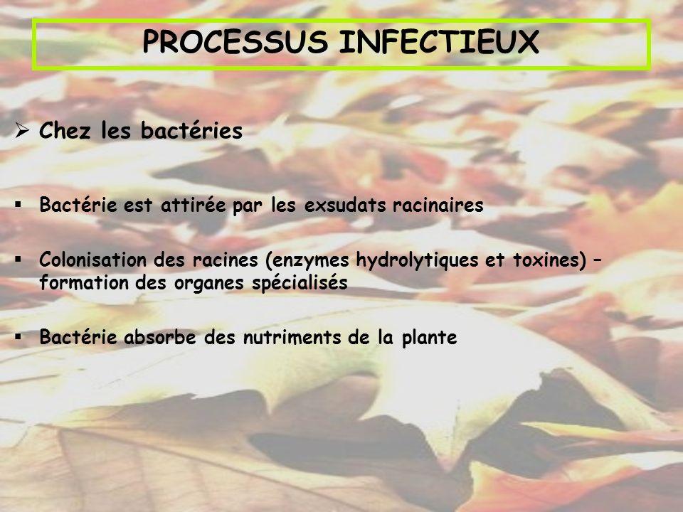 PROCESSUS INFECTIEUX Chez les bactéries