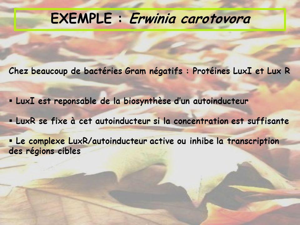 EXEMPLE : Erwinia carotovora
