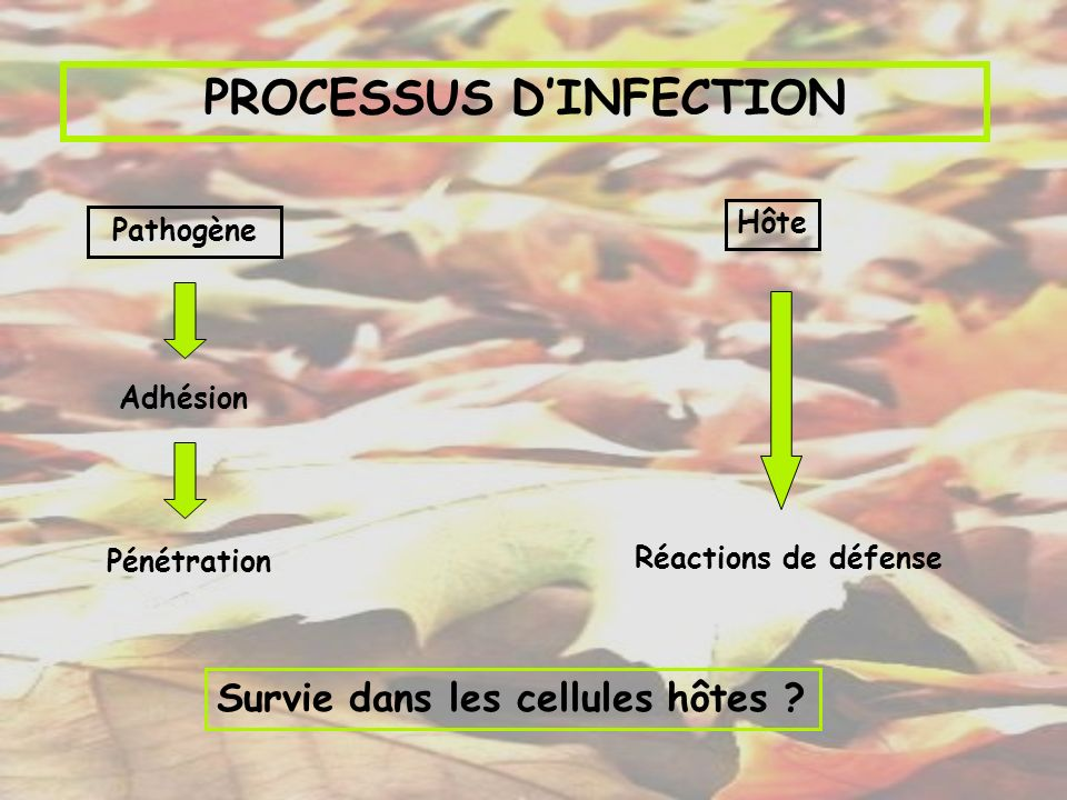 PROCESSUS D'INFECTION