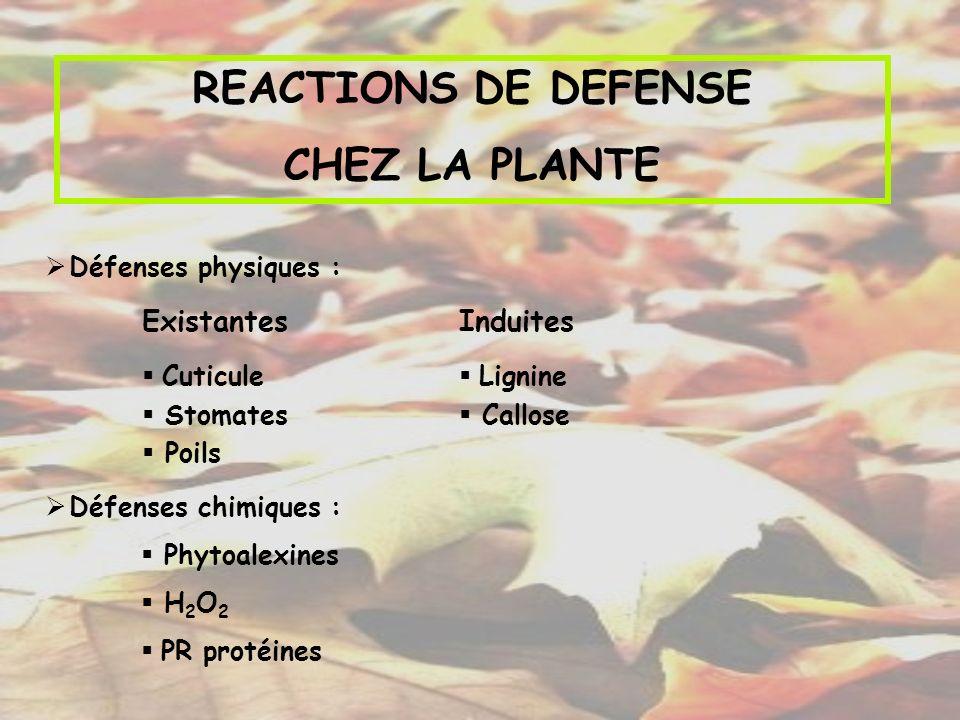 REACTIONS DE DEFENSE CHEZ LA PLANTE