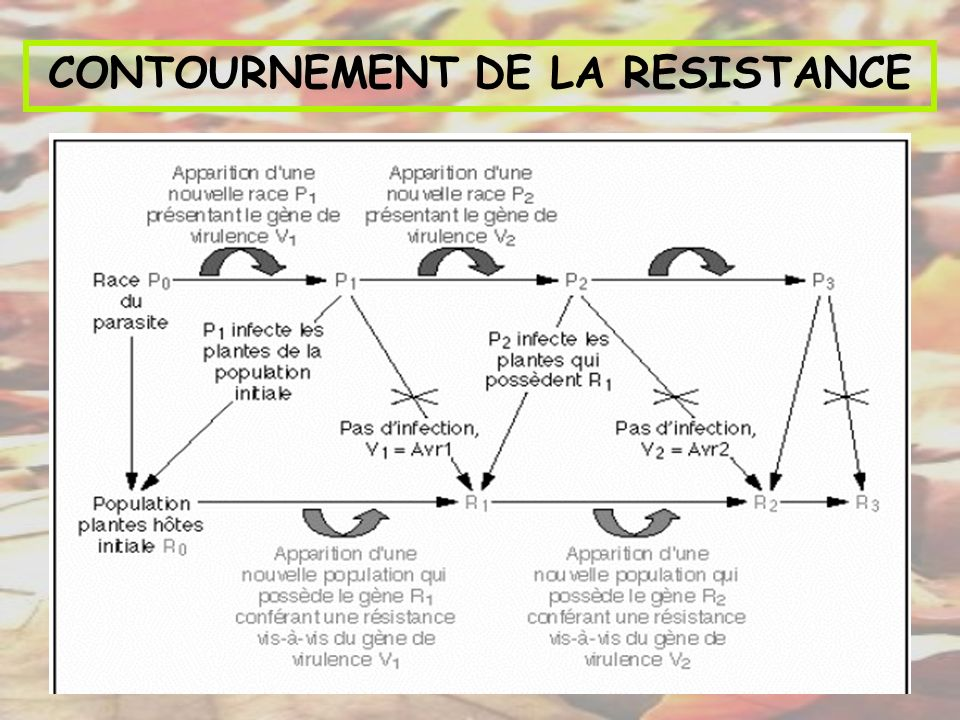 CONTOURNEMENT DE LA RESISTANCE