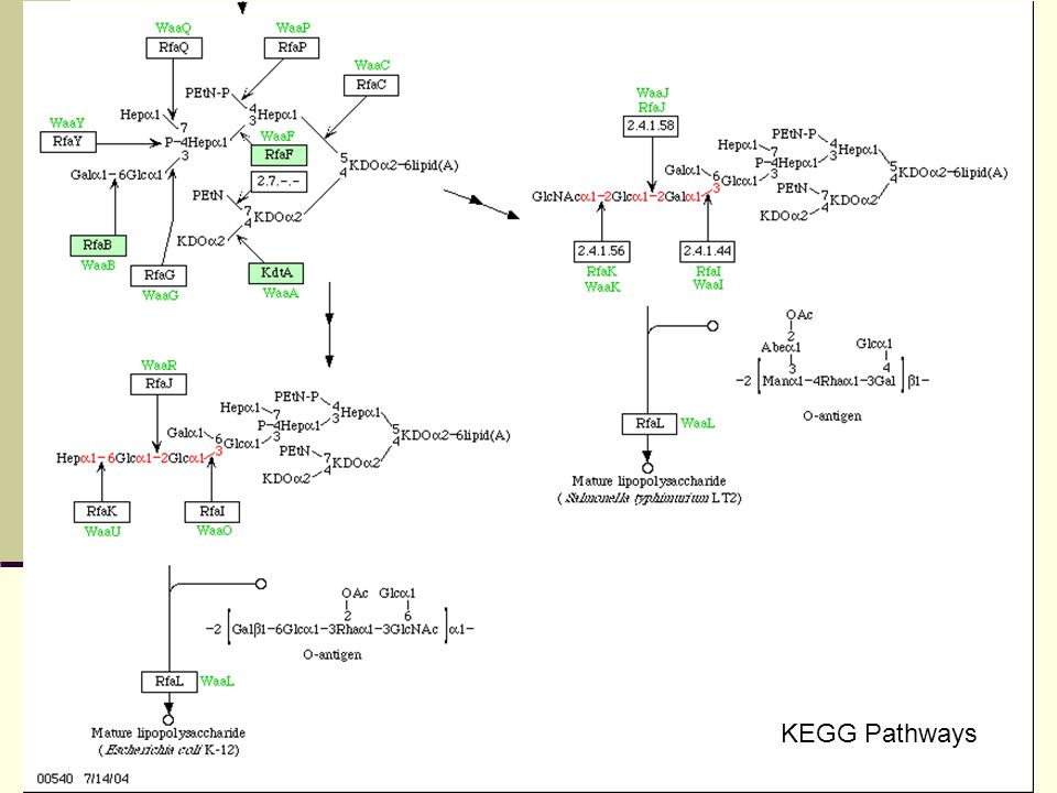 KEGG Pathways