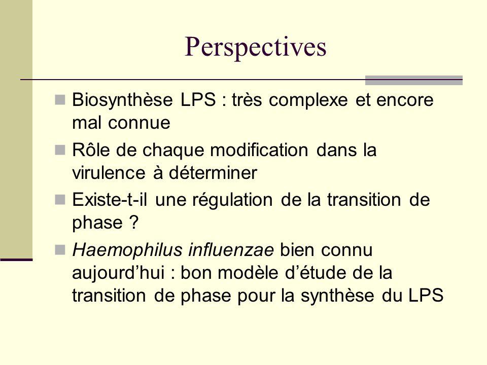 Perspectives Biosynthèse LPS : très complexe et encore mal connue