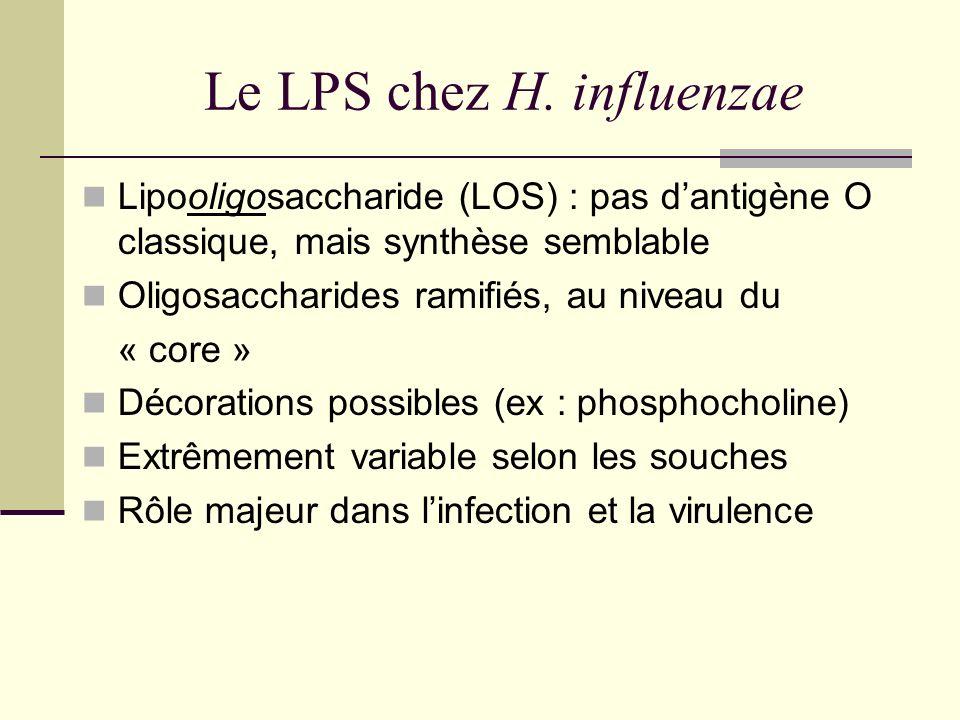 Le LPS chez H. influenzae