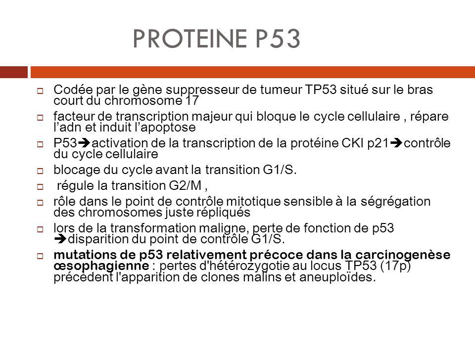 PROTEINE P53 Codée par le gène suppresseur de tumeur TP53 situé sur le bras court du chromosome 17.