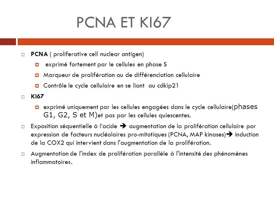 PCNA ET KI67 PCNA ( proliferative cell nuclear antigen)
