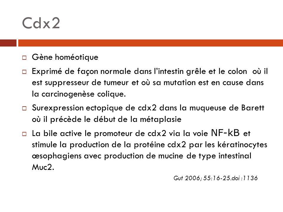 Cdx2 Gène homéotique.